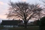 Winter Sunrise 30 Nov 002